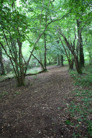 Abbotstone wood
