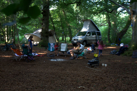 Campsite Review Abbotstone Wood Arlesford Nr Winchester