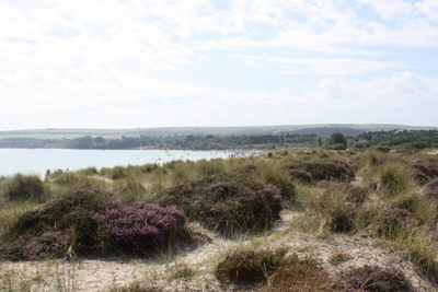 Studland sand dunes